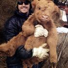 20 фотографий очаровательных коров, которые решили доказать, что они ничем не хуже собак