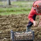 7 ошибок, которые совершают почти все огородники