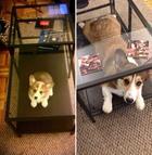 Милые щенки, выросшие во взрослых собак