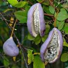 10 экзотических фруктов,о которых вы даже не слышали