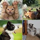 Самые убойные фото с конкурса домашних животных