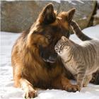 В Госдуму внесли закон об уголовных сроках за жестокое обращение с животными