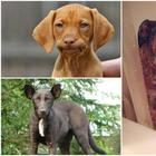 17 собак с человеческими глазами: наверное в прошлой жизни они были людьми