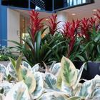 Лучшие растения для холодного фойе и холла