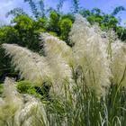 10 причин посадить в своем саду декоративные травы