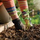 Что посеять и посадить в огороде в мае