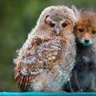В природе возможно всё! 23 умилительных фото дружбы зверей
