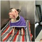 Изуродованный болезнью пес не поверил счастью, когда на него обратили внимание