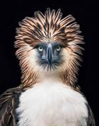 Красивые портреты исчезающих птиц