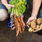 7 вещей, которые вы должны сделать с растениями до наступления мороза