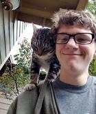 20 случаев, когда котики завелись дома сами, и просто поставили людей перед фактом
