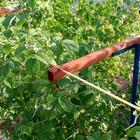 Шпалера для малины своими руками: фото