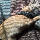 Два котенка влюбились друг в друга и просто не могут больше скрывать своих чувств