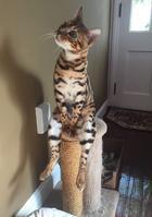 Эти смешные кошки