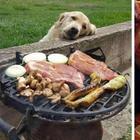 35 фото собак, которые выпрашивают еду так, что вы отдадите им все
