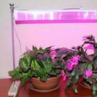 Основные правила ухода за комнатными горшечными растениями в домашних условиях