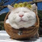 20 кошачьих знаменитостей, которые взорвали Интернет