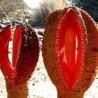 Самое странное растение в мире