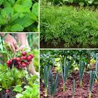 Что посеять и посадить в огороде в августе