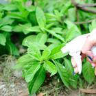 Народные средства от вредителей огорода и сада