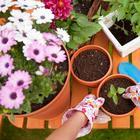 Как правильно сажать комнатные цветы в горшок