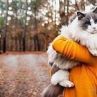 Самые пушистые в мире кошки