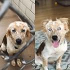 20 преобразившихся животных до и после того, как они нашли дом и стали любимыми