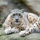 9 вымирающих видов животных, которые смогли выжить