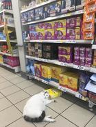 Коты, которые диктуют хозяевам свои правила