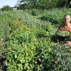 Органическое земледелие на даче: мифы и реальность