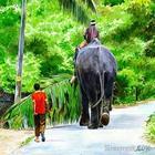 Абдул Салим Кочи (Abdul Salim) - индийский художник. Акварельные работы