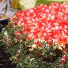 Салат к Новогоднему столу!
