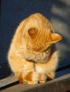 Фото скромных и стеснительных животных