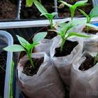 13 необычных способов выращивания рассады. Какой выберете вы