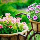 Какие цветы сеют на рассаду в феврале
