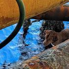В Тайланде в 127 км от берега в открытом море спасли собаку
