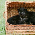 Все кошки своенравны, игривы и обожают коробки! размер тут не имеет значения!