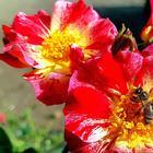 Цветы Богини