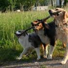 Фотографии с животными для хорошего настроения