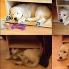 30 смешных фотографий с животными