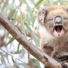 16 безобидных с виду животных, которые на самом деле опасны