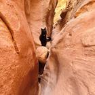 Милли - кошка-скалолаз из штата Юта, США