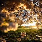 Весна 2021: фото прогулка