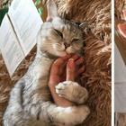 12 феноменальных фактов о кошках, которые заставляют усомниться в их земном происхождении