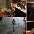 18 смешных животных, чьи выходки заставят посмеяться от души