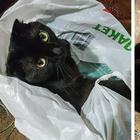 Фото спасенных животных, доказывающие, что любовь и забота творят чудеса