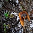 Лучшие фотографии дикой природы 2021