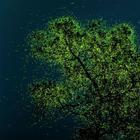 """Захватывающие фотографии-победители конкурса """"Охрана природы 2021"""""""