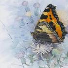 Мир бабочек Бенингфилда