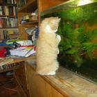 Коты и аквариум